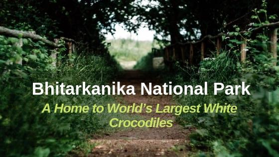 Odisha's-Bhitarkanika-National-Park